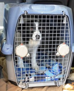 a dog inside crate